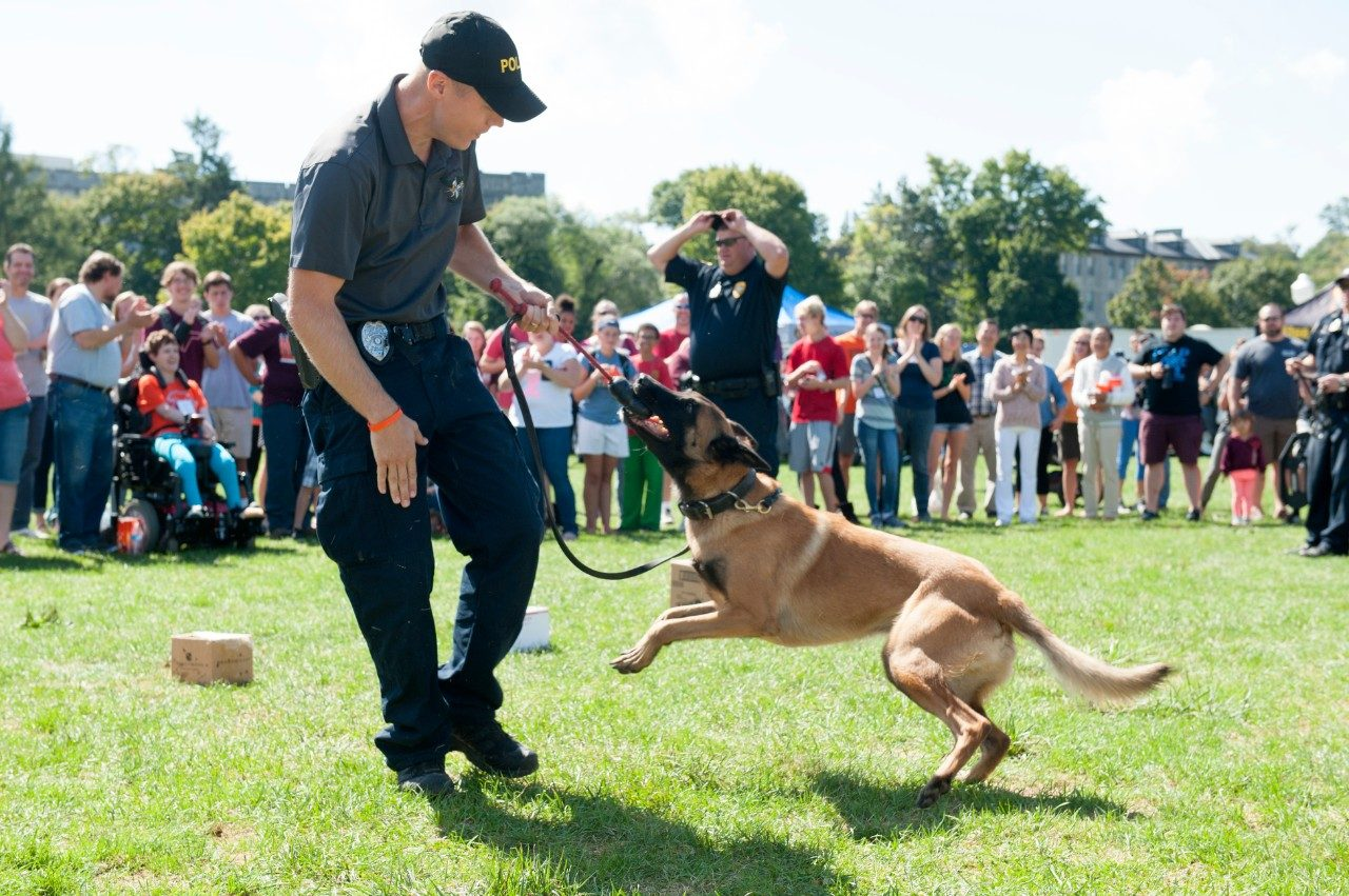 An officer does a demonstration with a police dog.